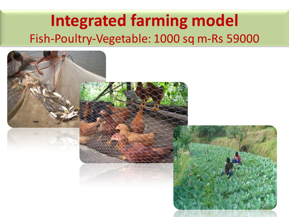 Integrated farming model Fish-Poultry-Vegetable: 1000 sq m-Rs 59000