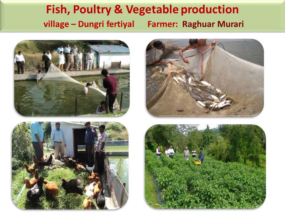 Fish, Poultry & Vegetable production village – Dungri fertiyal Farmer: Raghuar Murari