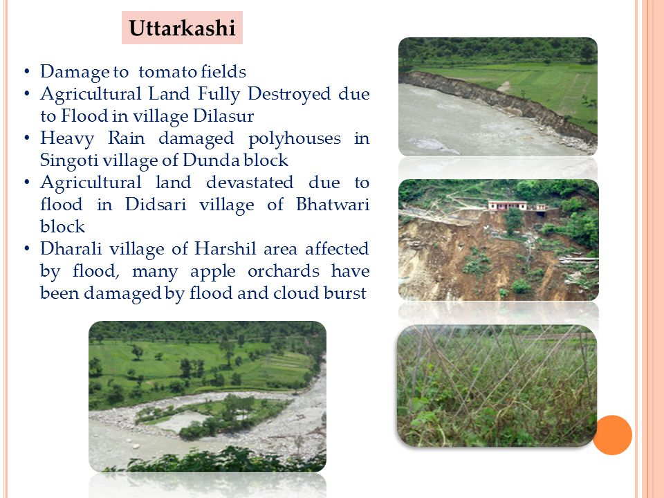 Uttarkashi Damage to tomato fields Agricultural Land Fully Destroyed due to Flood in village Dilasur Heavy Rain damaged polyhouses in Singoti village