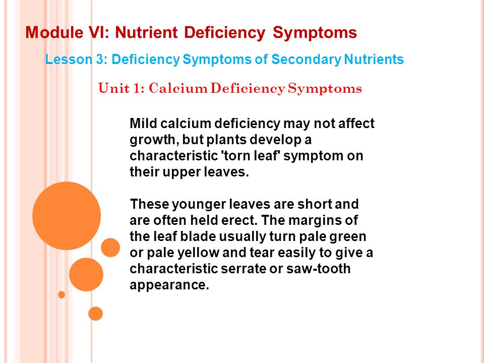Module VI: Nutrient Deficiency Symptoms Lesson 3: Deficiency Symptoms of Secondary Nutrients Unit 1: Calcium Deficiency Symptoms In some cultivars, the leaf tips become deformed and curl to form sword-like tips, or bend down and break off leaving blunt tips to the leaves.