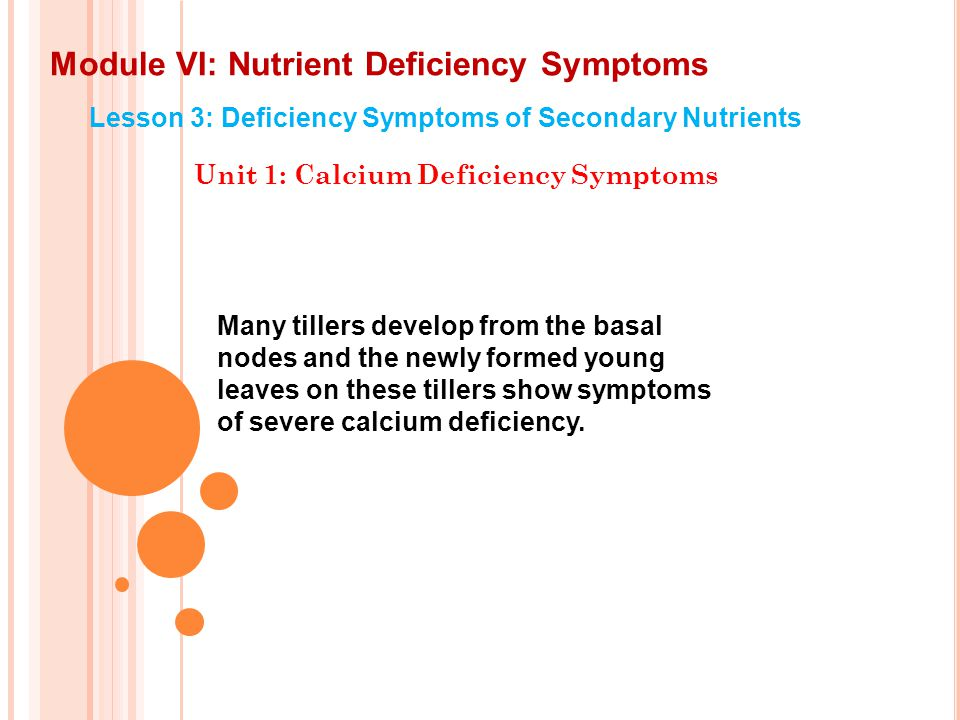Module VI: Nutrient Deficiency Symptoms Lesson 3: Deficiency Symptoms of Secondary Nutrients Unit 1: Calcium Deficiency Symptoms Flowering and maturity are delayed by mild calcium deficiency, but fruit size is often unaffected.