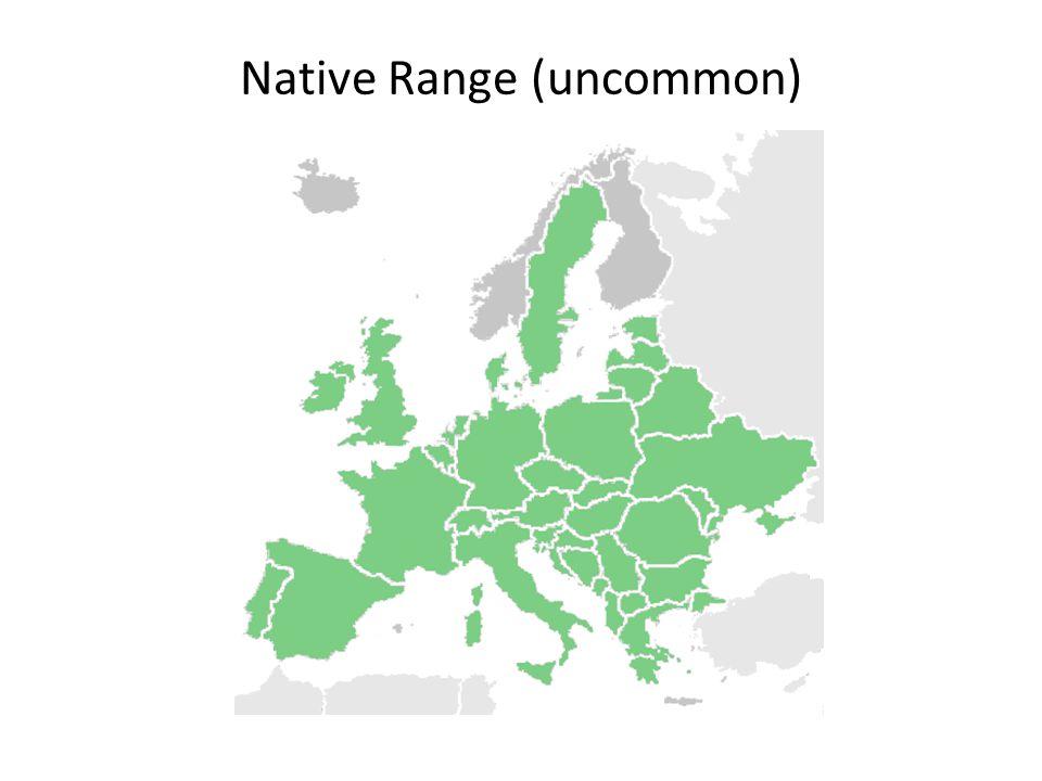 Native Range (uncommon)
