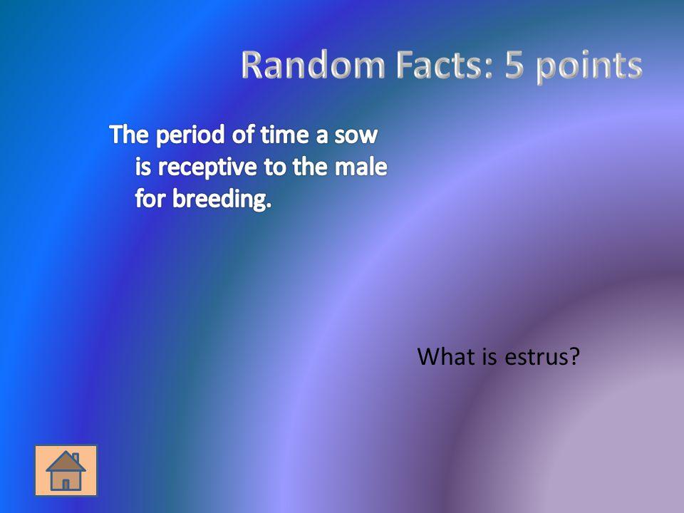 What is estrus?