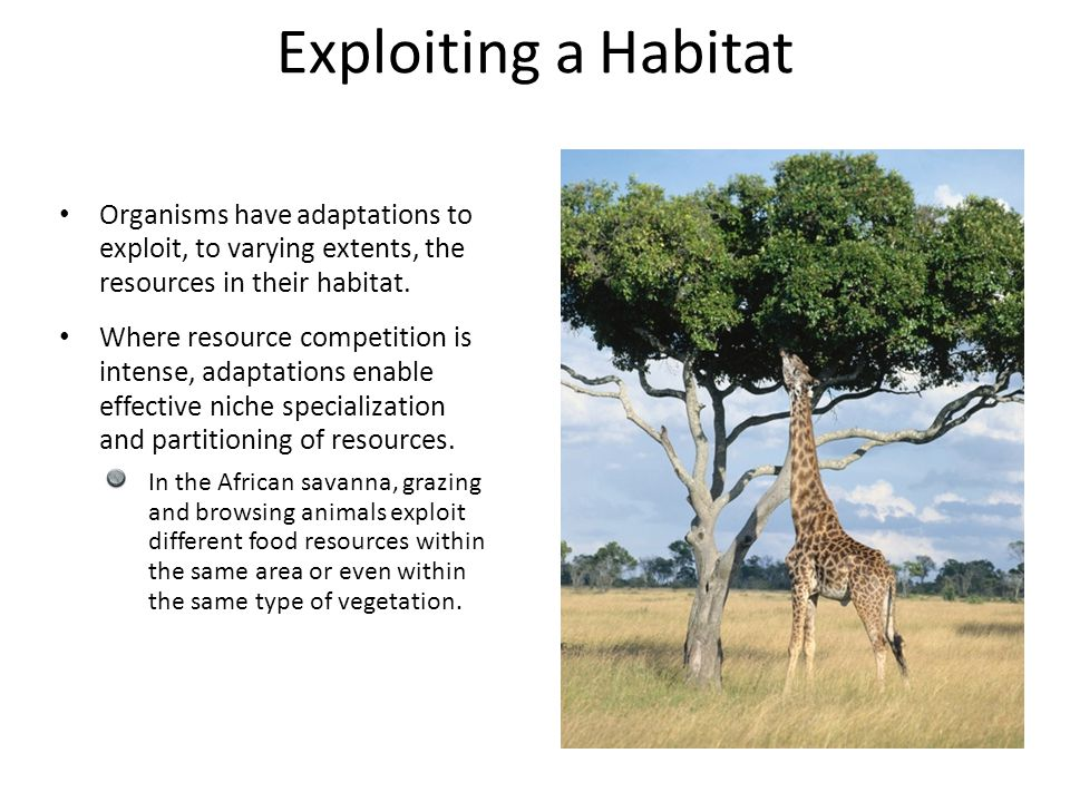 Organisms have adaptations to exploit, to varying extents, the resources in their habitat. Where resource competition is intense, adaptations enable e