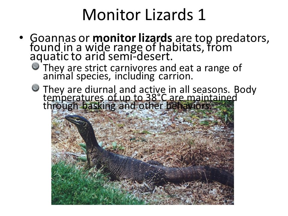 Monitor Lizards 1 Goannas or monitor lizards are top predators, found in a wide range of habitats, from aquatic to arid semi-desert. They are strict c