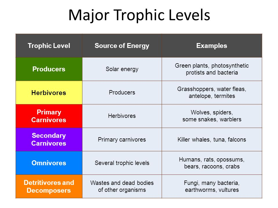 Major Trophic Levels Trophic LevelSource of EnergyExamples Producers Solar energy Green plants, photosynthetic protists and bacteria Herbivores Produc