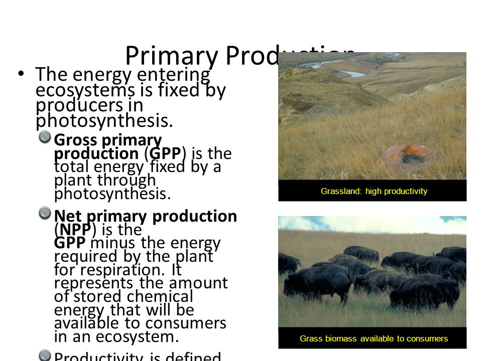 The energy entering ecosystems is fixed by producers in photosynthesis. Gross primary production (GPP) is the total energy fixed by a plant through ph