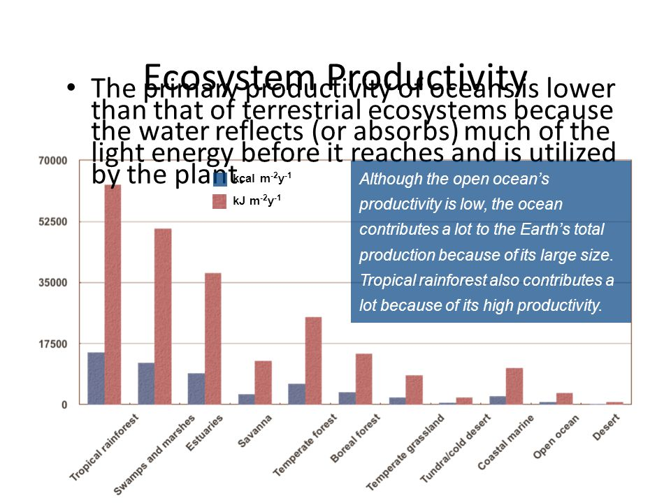 The primary productivity of oceans is lower than that of terrestrial ecosystems because the water reflects (or absorbs) much of the light energy befor