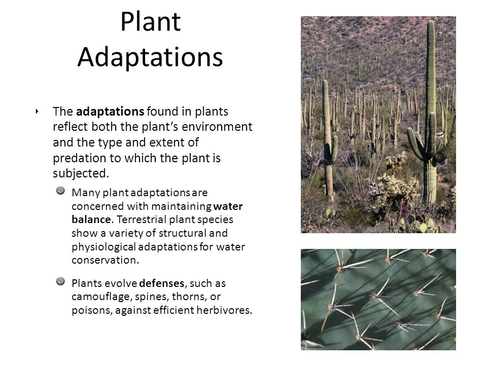‣ The adaptations found in plants reflect both the plant's environment and the type and extent of predation to which the plant is subjected. Many plan