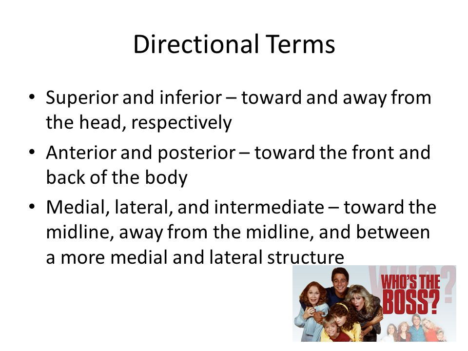 Directional Terms Superior and inferior – toward and away from the head, respectively Anterior and posterior – toward the front and back of the body Medial, lateral, and intermediate – toward the midline, away from the midline, and between a more medial and lateral structure