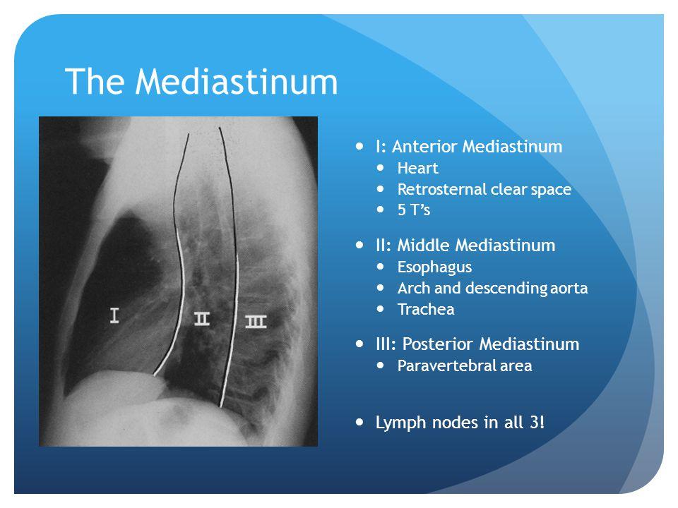 I: Anterior Mediastinum Heart Retrosternal clear space 5 T's II: Middle Mediastinum Esophagus Arch and descending aorta Trachea III: Posterior Mediast