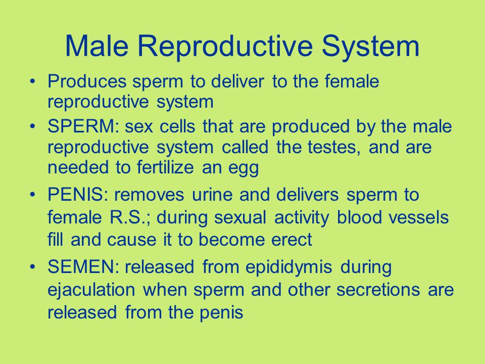 Male Reproductive System Made of internal and external organs TESTES: makes sperm and Testosterone (sex hormone, also causes facial hair, body odor and voice to deepen) Produce several hundred million sperm each day SCROTUM: skin covered sac that hangs from the body to keep sperm cooler since they can not properly develop at higher temperatures of inner body