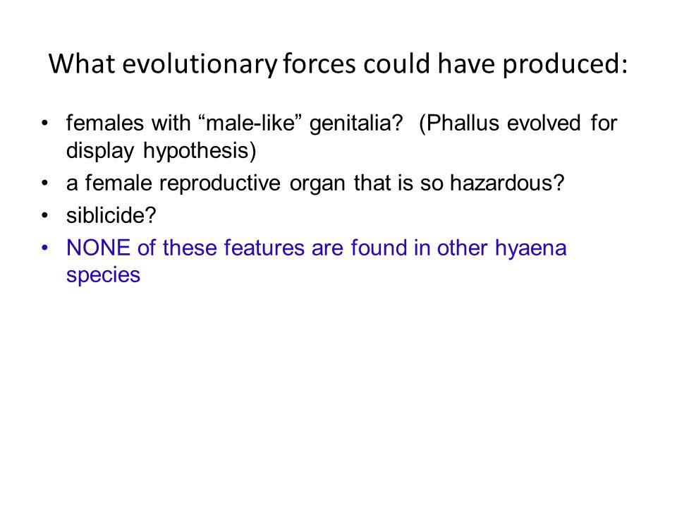 females with male-like genitalia.