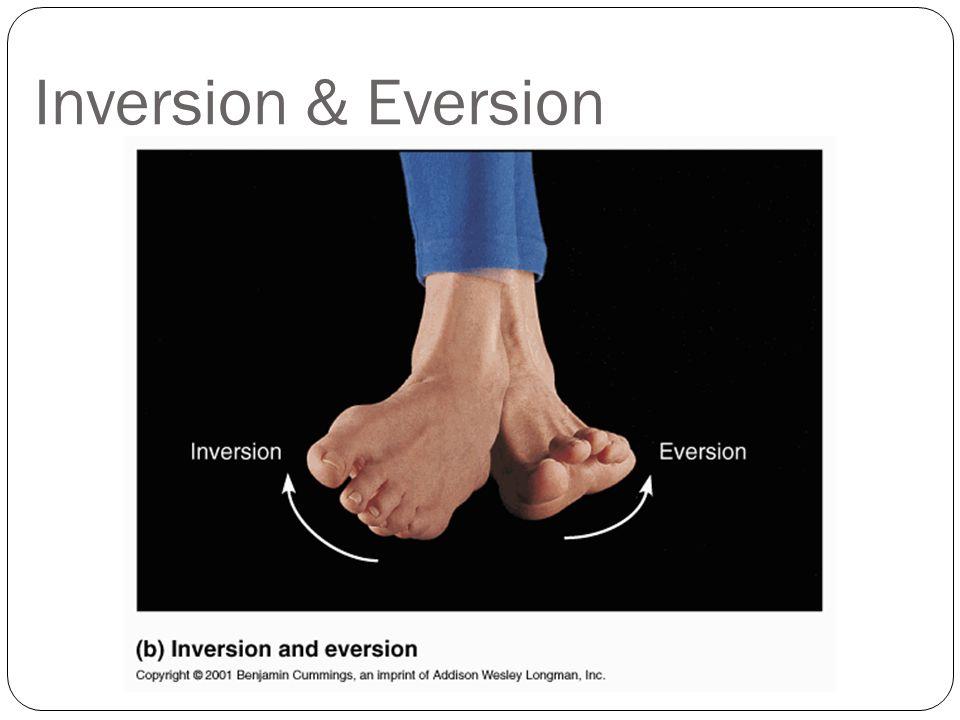 Inversion & Eversion