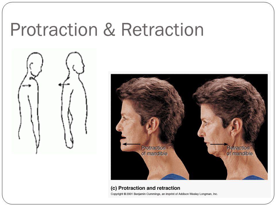 Protraction & Retraction