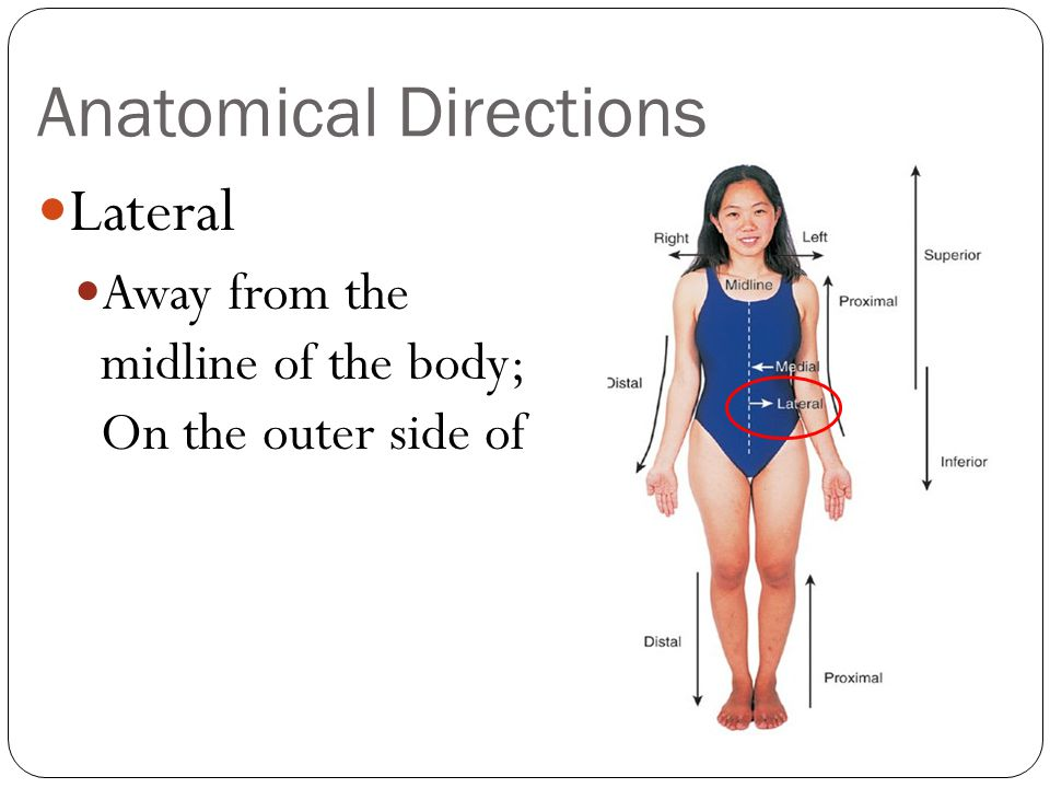 Anatomical Directions Proximal Closer to the origin of the body part or the point of attachment of a limb to the body trunk