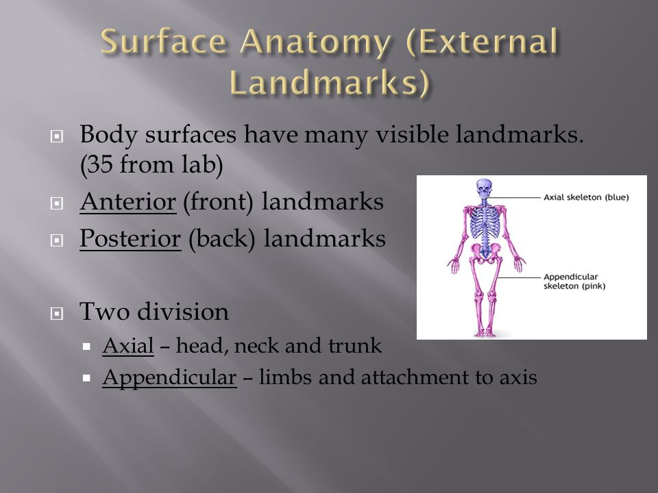  Body surfaces have many visible landmarks. (35 from lab)  Anterior (front) landmarks  Posterior (back) landmarks  Two division  Axial – head, ne