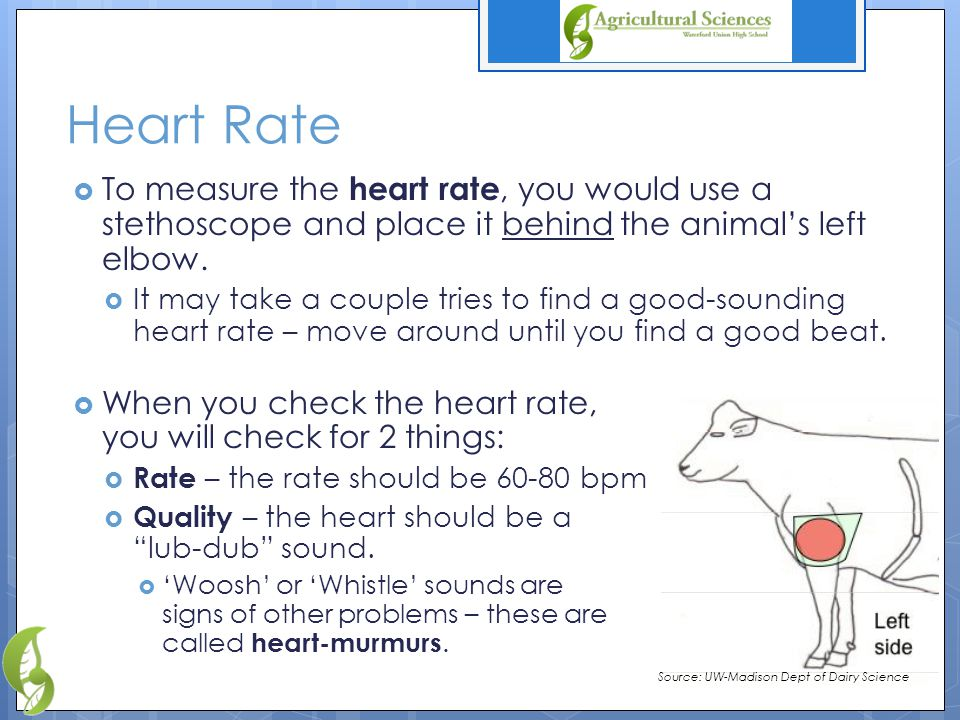 Heart Rate  To measure the heart rate, you would use a stethoscope and place it behind the animal's left elbow.