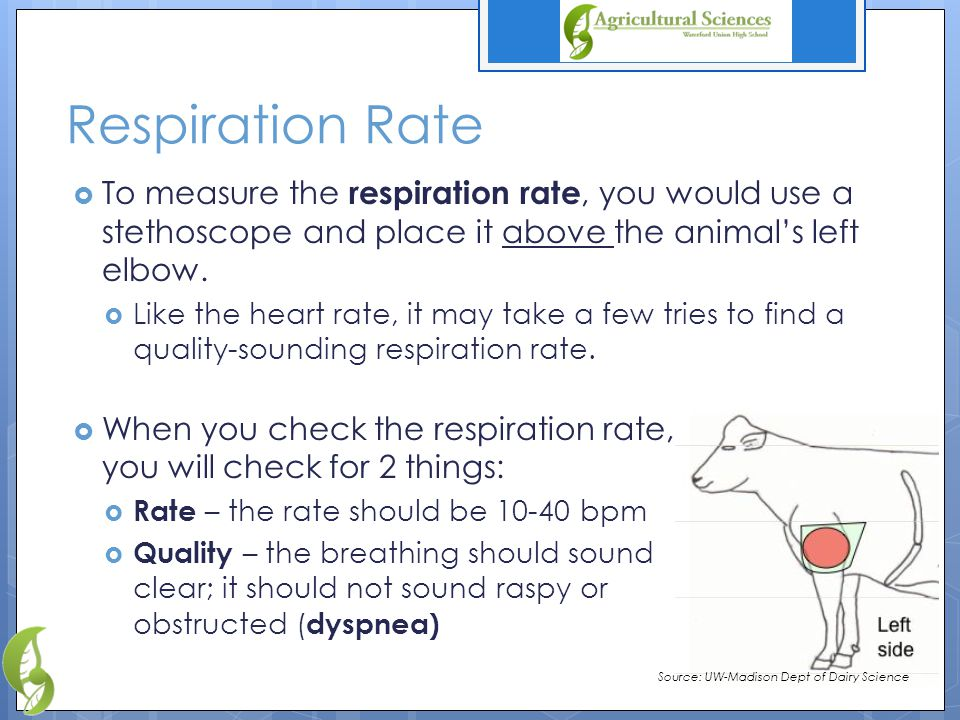 Respiration Rate  To measure the respiration rate, you would use a stethoscope and place it above the animal's left elbow.
