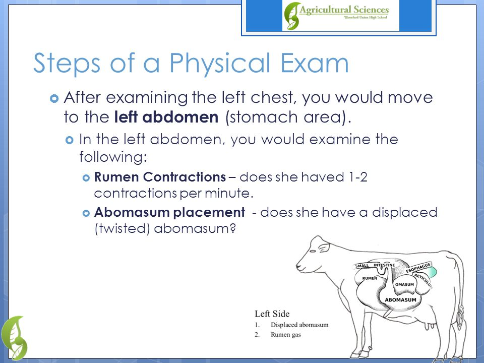 Steps of a Physical Exam  After examining the left chest, you would move to the left abdomen (stomach area).