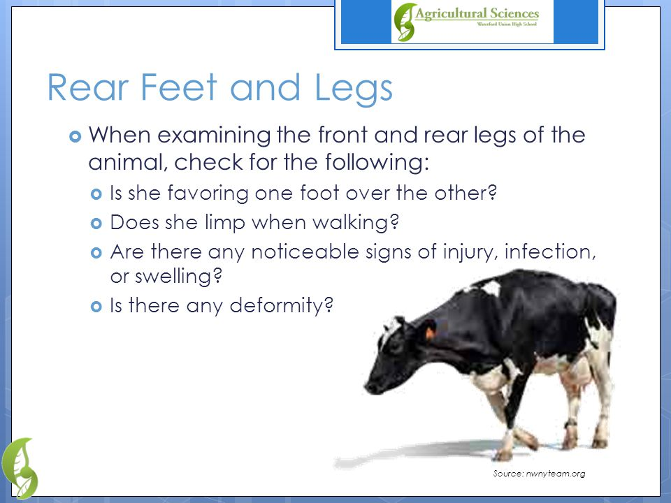 Rear Feet and Legs  When examining the front and rear legs of the animal, check for the following:  Is she favoring one foot over the other.