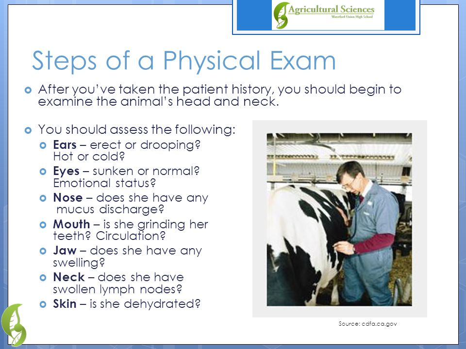 Steps of a Physical Exam  After you've taken the patient history, you should begin to examine the animal's head and neck.