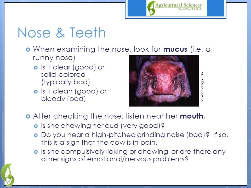 Right Side  Most of the symptoms that you will check would be found on the head or left-side of the animal.