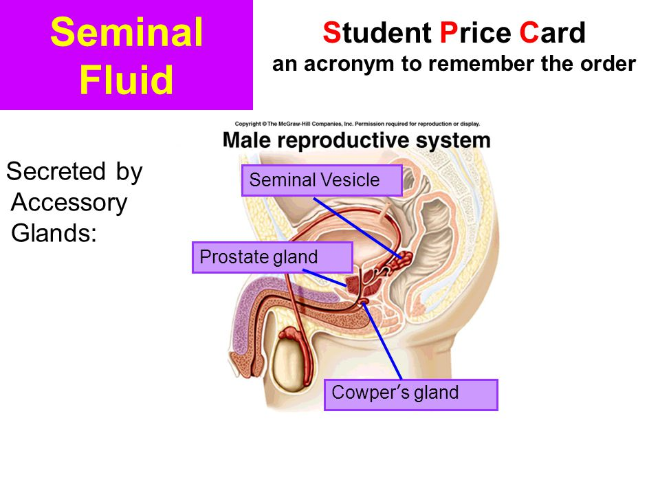 Seminal Fluid Secreted by Accessory Glands: Cowper's gland Seminal Vesicle Prostate gland Student Price Card an acronym to remember the order