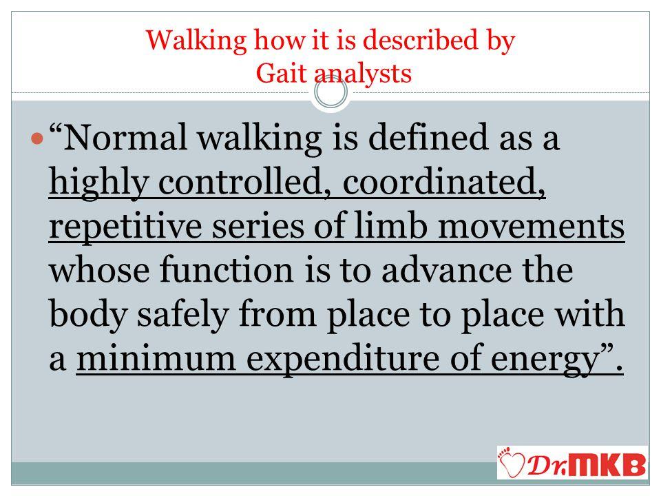 2.C.- Initial Heel off Phase Plantar Flexors Gastro soleus Muscle plantar flexes the ankle.
