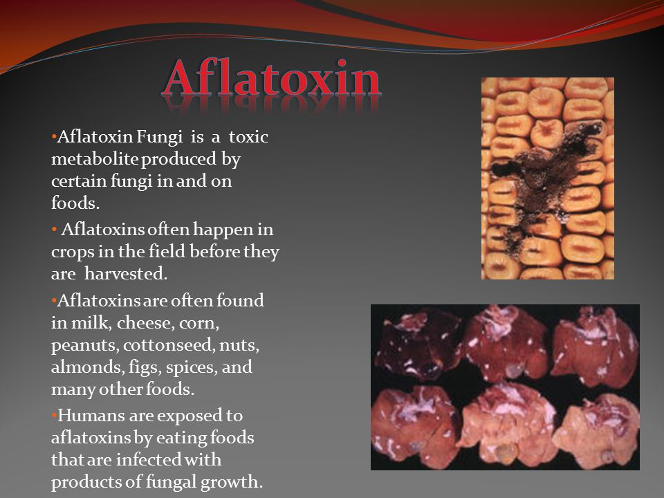 Aflatoxin Fungi is a toxic metabolite produced by certain fungi in and on foods. Aflatoxins often happen in crops in the field before they are harvest