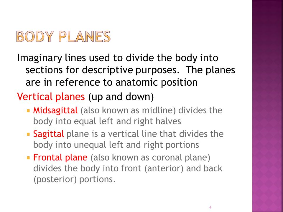 Imaginary lines used to divide the body into sections for descriptive purposes. The planes are in reference to anatomic position Vertical planes (up a