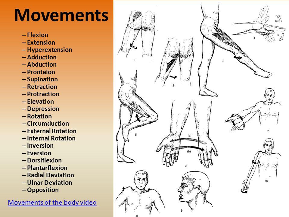 Movements – Flexion – Extension – Hyperextension – Adduction – Abduction – Prontaion – Supination – Retraction – Protraction – Elevation – Depression