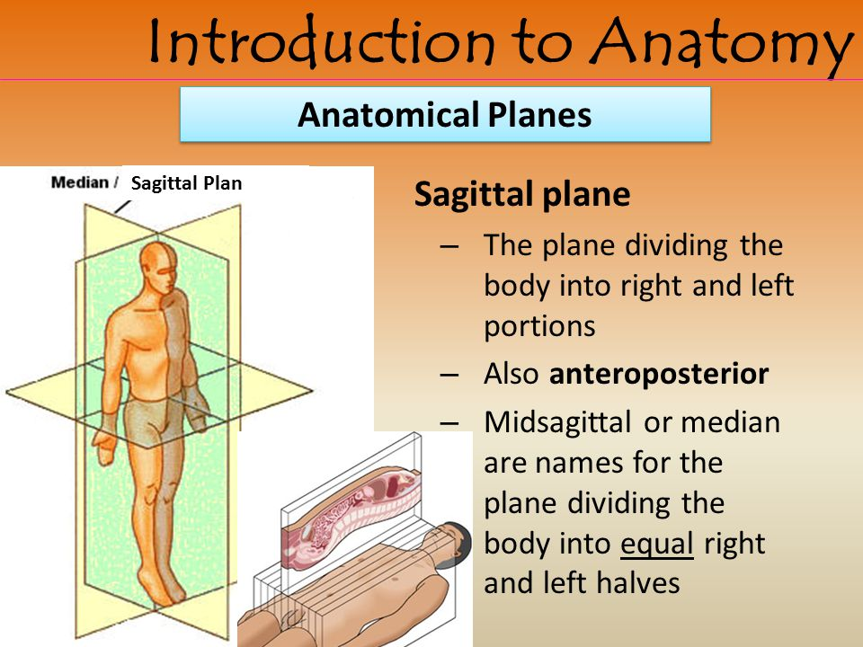 Sagittal plane – The plane dividing the body into right and left portions – Also anteroposterior – Midsagittal or median are names for the plane divid