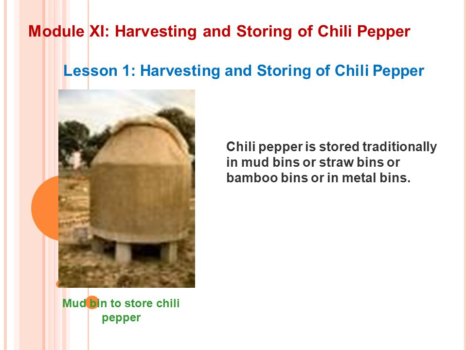 Module XI: Harvesting and Storing of Chili Pepper Lesson 1: Harvesting and Storing of Chili Pepper Chili pepper is stored traditionally in mud bins or straw bins or bamboo bins or in metal bins.