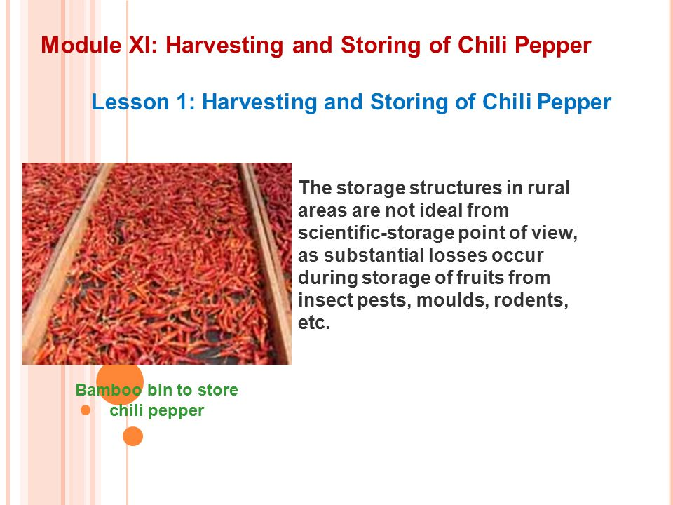 Module XI: Harvesting and Storing of Chili Pepper Lesson 1: Harvesting and Storing of Chili Pepper The storage structures in rural areas are not ideal from scientific-storage point of view, as substantial losses occur during storage of fruits from insect pests, moulds, rodents, etc.
