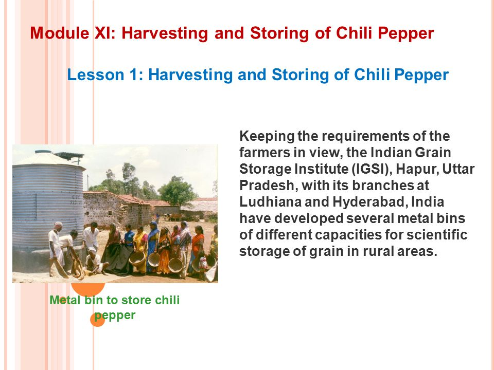 Module XI: Harvesting and Storing of Chili Pepper Lesson 1: Harvesting and Storing of Chili Pepper Keeping the requirements of the farmers in view, the Indian Grain Storage Institute (IGSI), Hapur, Uttar Pradesh, with its branches at Ludhiana and Hyderabad, India have developed several metal bins of different capacities for scientific storage of grain in rural areas.