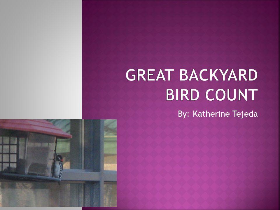  Description: Dark Eyed Junco is a very interesting bird.