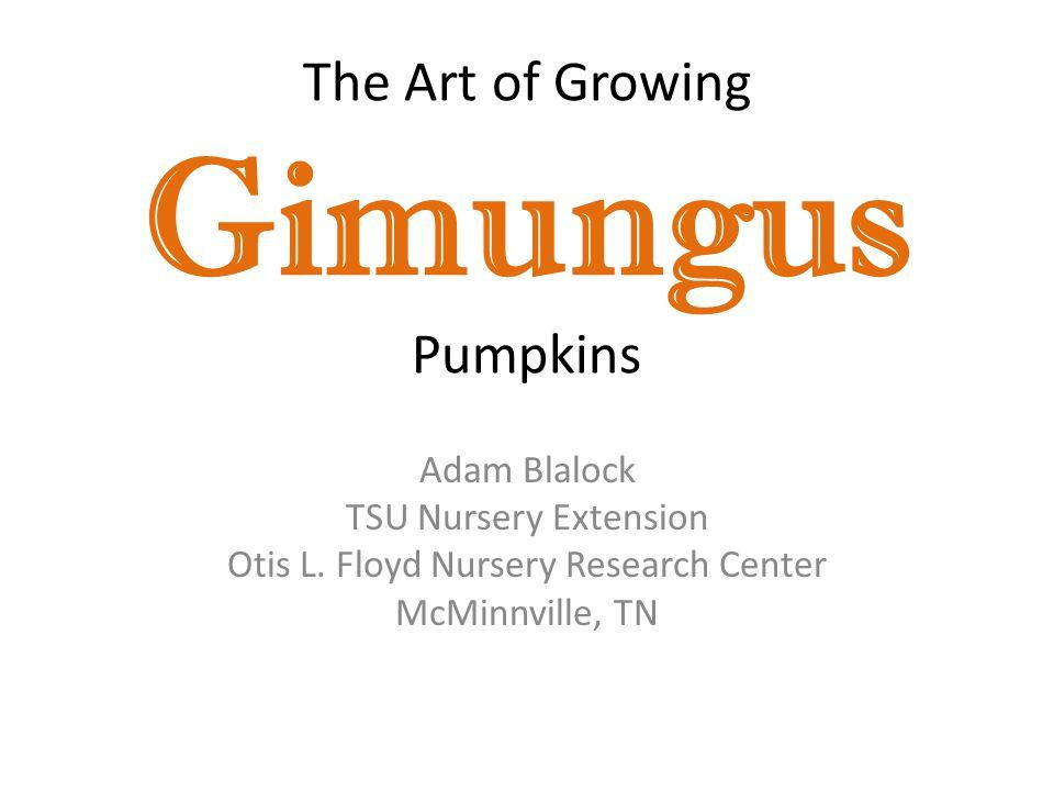 How do you Grow a Giant Pumpkin.