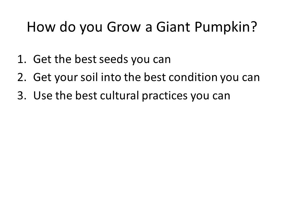 How do you Grow a Giant Pumpkin.