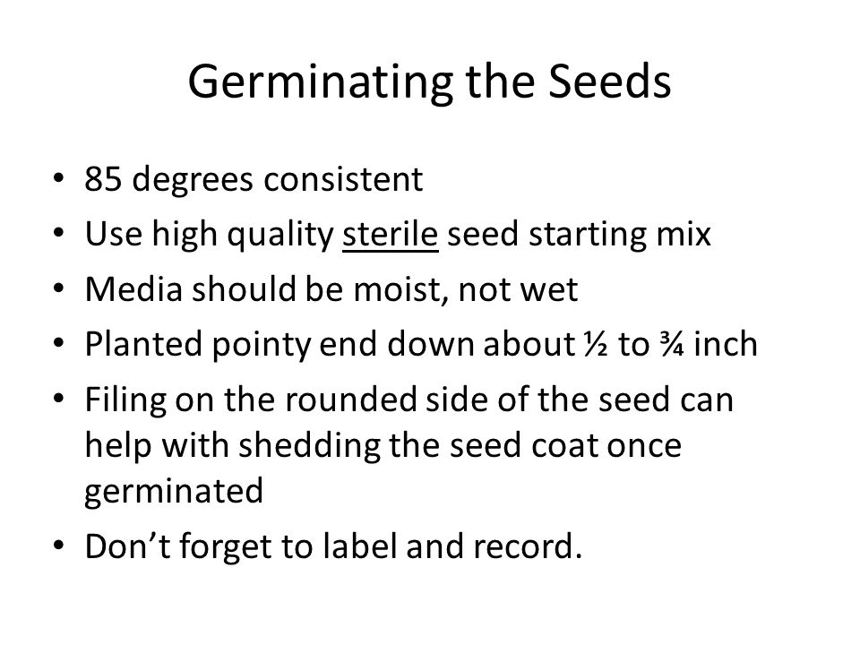 Germinating the Seeds 85 degrees consistent Use high quality sterile seed starting mix Media should be moist, not wet Planted pointy end down about ½ to ¾ inch Filing on the rounded side of the seed can help with shedding the seed coat once germinated Don't forget to label and record.