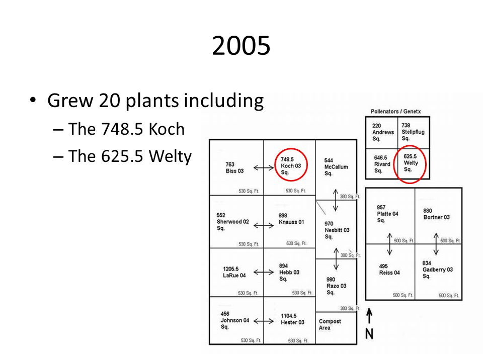 2005 Grew 20 plants including – The 748.5 Koch – The 625.5 Welty