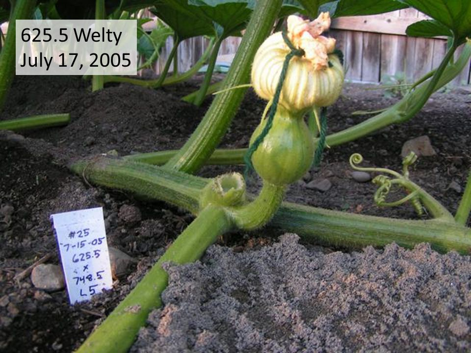 625.5 Welty July 17, 2005
