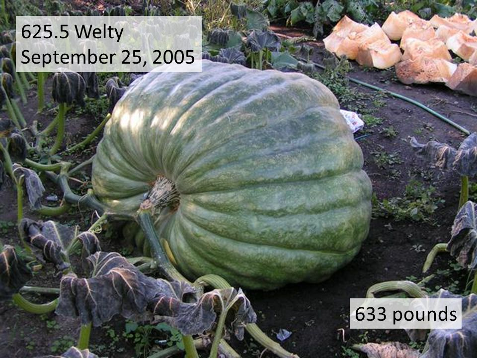 625.5 Welty September 25, 2005 633 pounds