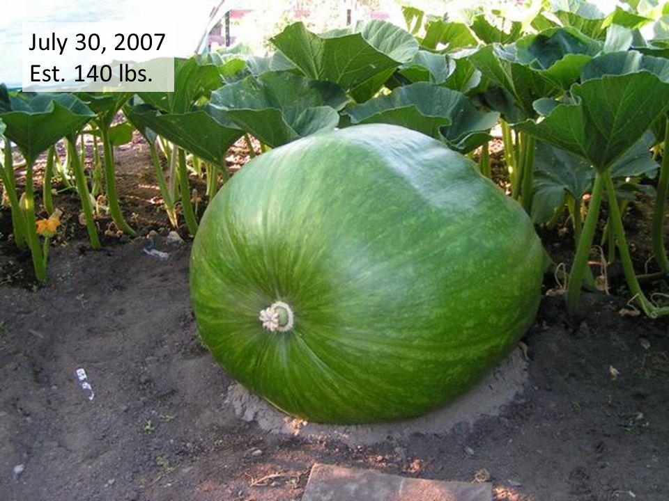 July 30, 2007 Est. 140 lbs.