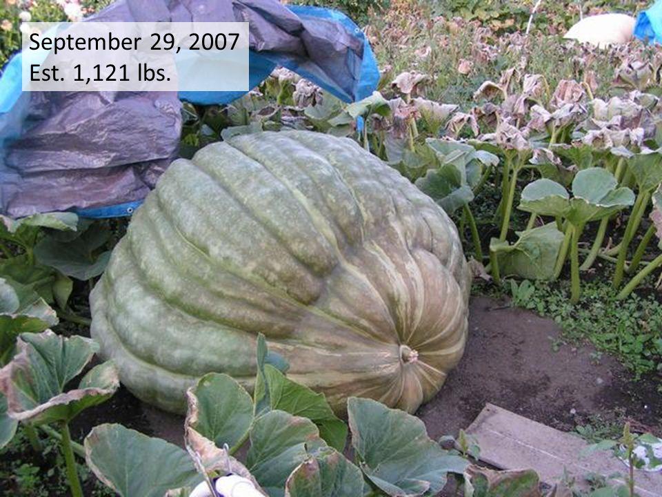 September 29, 2007 Est. 1,121 lbs.