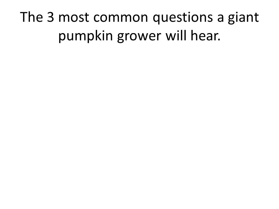 The 3 most common questions a giant pumpkin grower will hear.