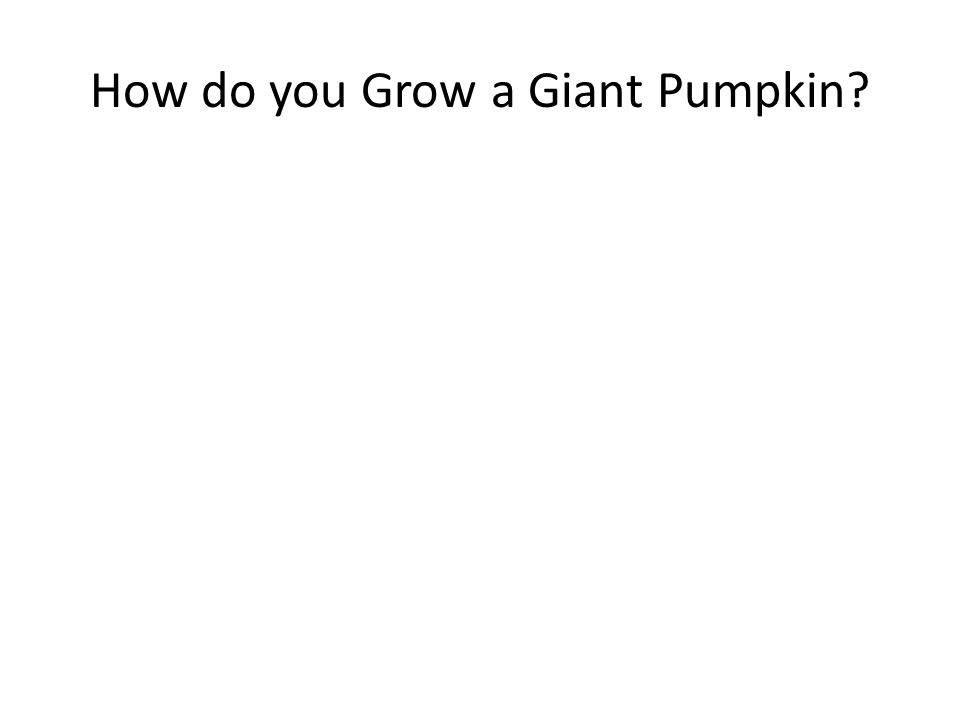 How do you Grow a Giant Pumpkin