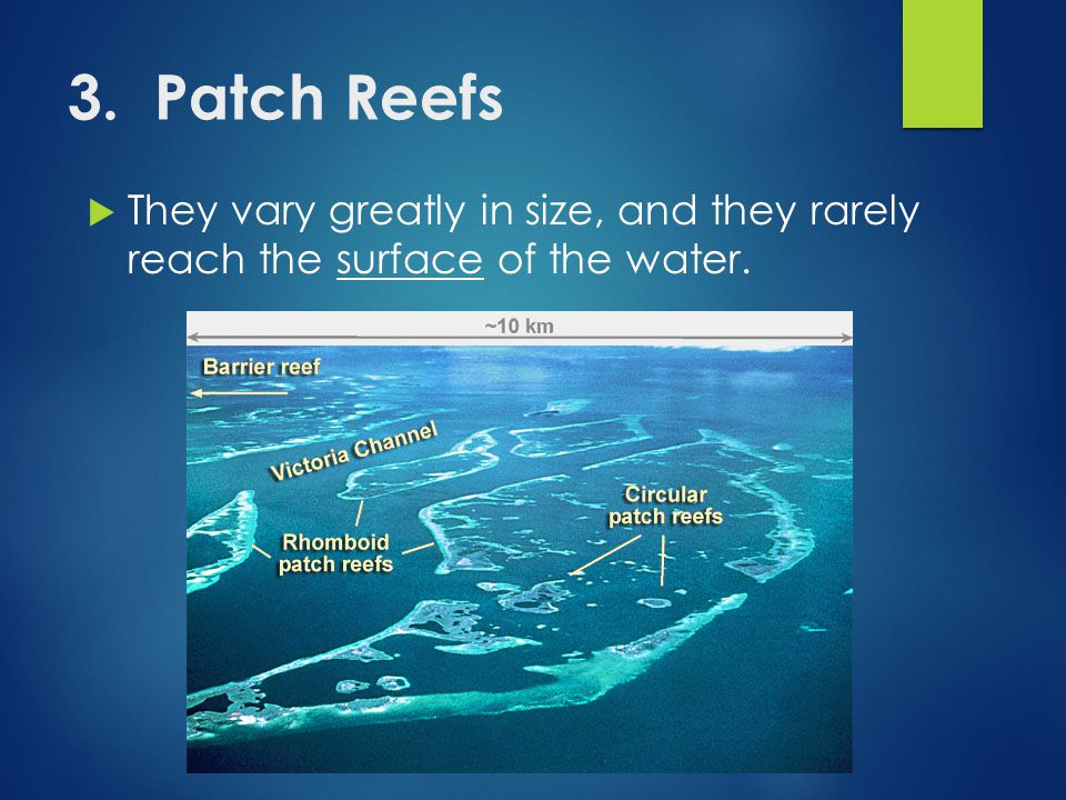 3. Patch Reefs  They vary greatly in size, and they rarely reach the surface of the water.