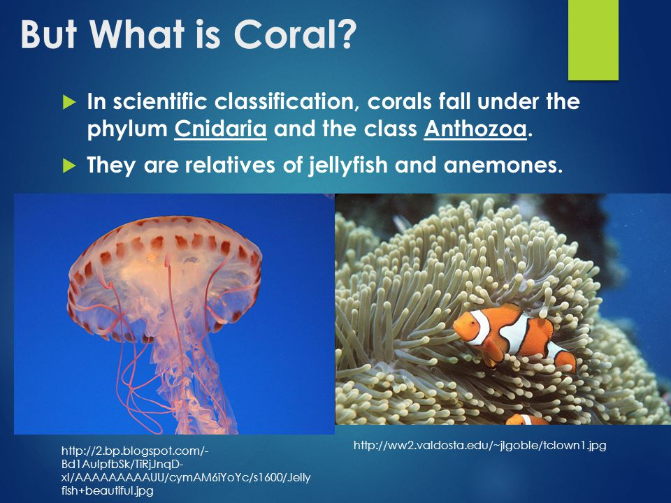 But What is Coral.