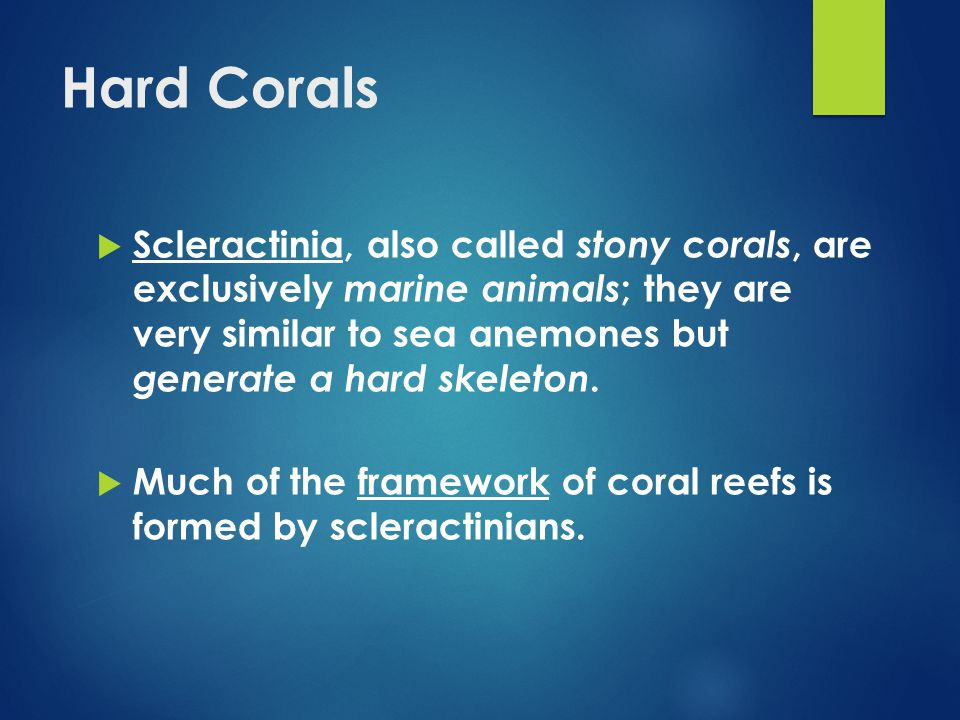 Hard Corals  Scleractinia, also called stony corals, are exclusively marine animals ; they are very similar to sea anemones but generate a hard skeleton.